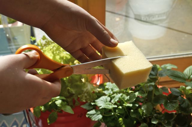 cutting foam to hold the plants