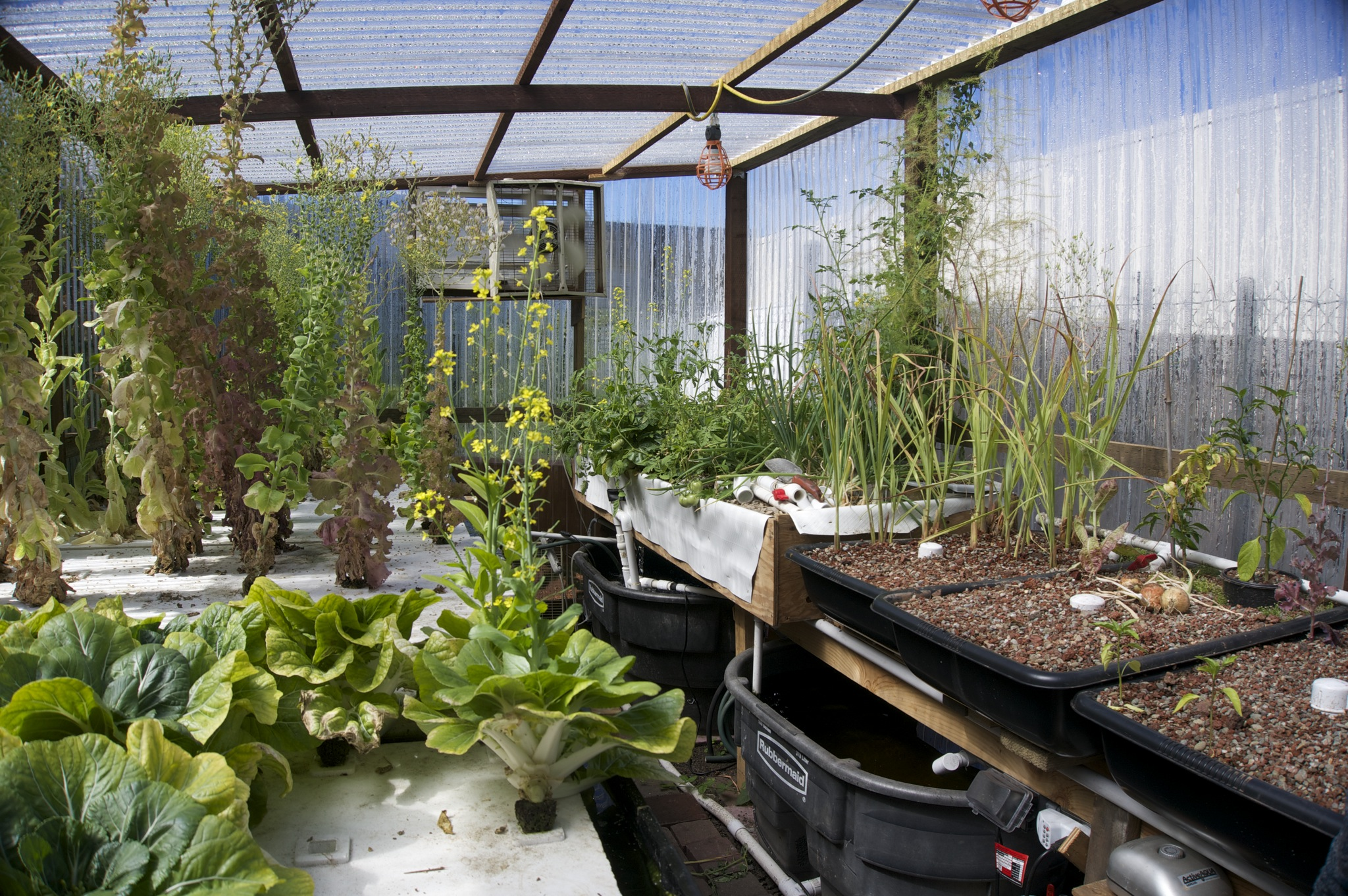 Greenhouse with aquaponics system
